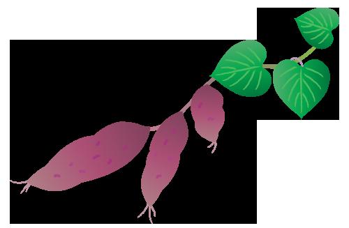 収穫したサツマイモのイラスト