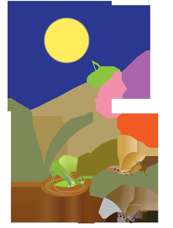 満月と虫の合唱