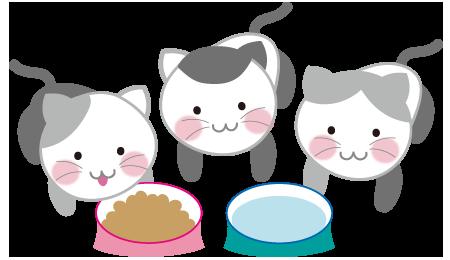 猫3匹とごはん