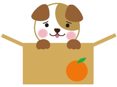 ダンボールの捨て犬