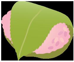 桜餅道明寺