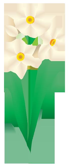 冬の花水仙