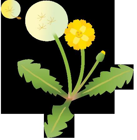 春の花たんぽぽ